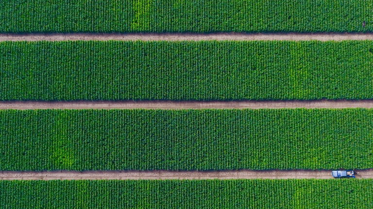 Aerial view of a green field with blue truck in row