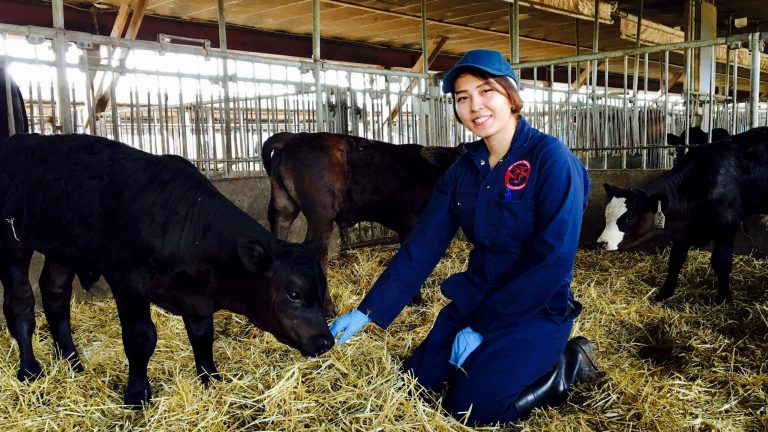 Nasrin, Arrell Food Institute Scholarship winner, sits with a beef calf
