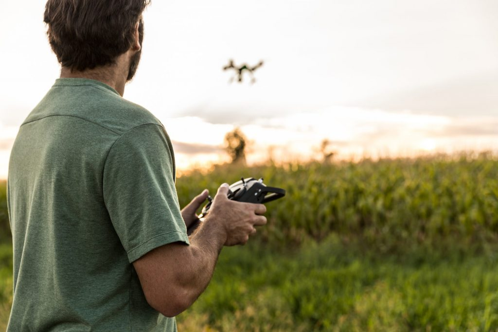 A man flies a drone over a corn field