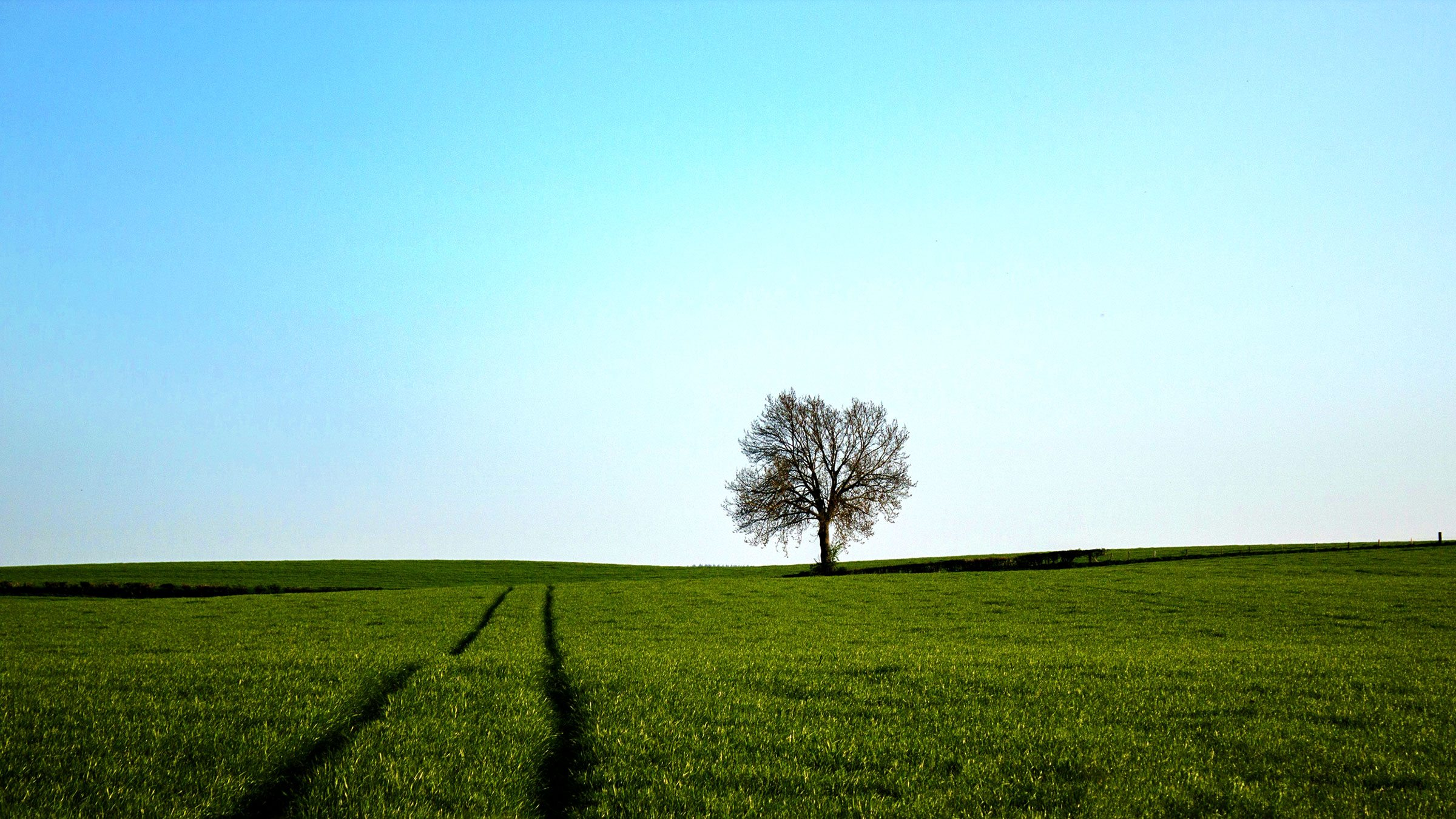A lone tree stands at the fence row of a field