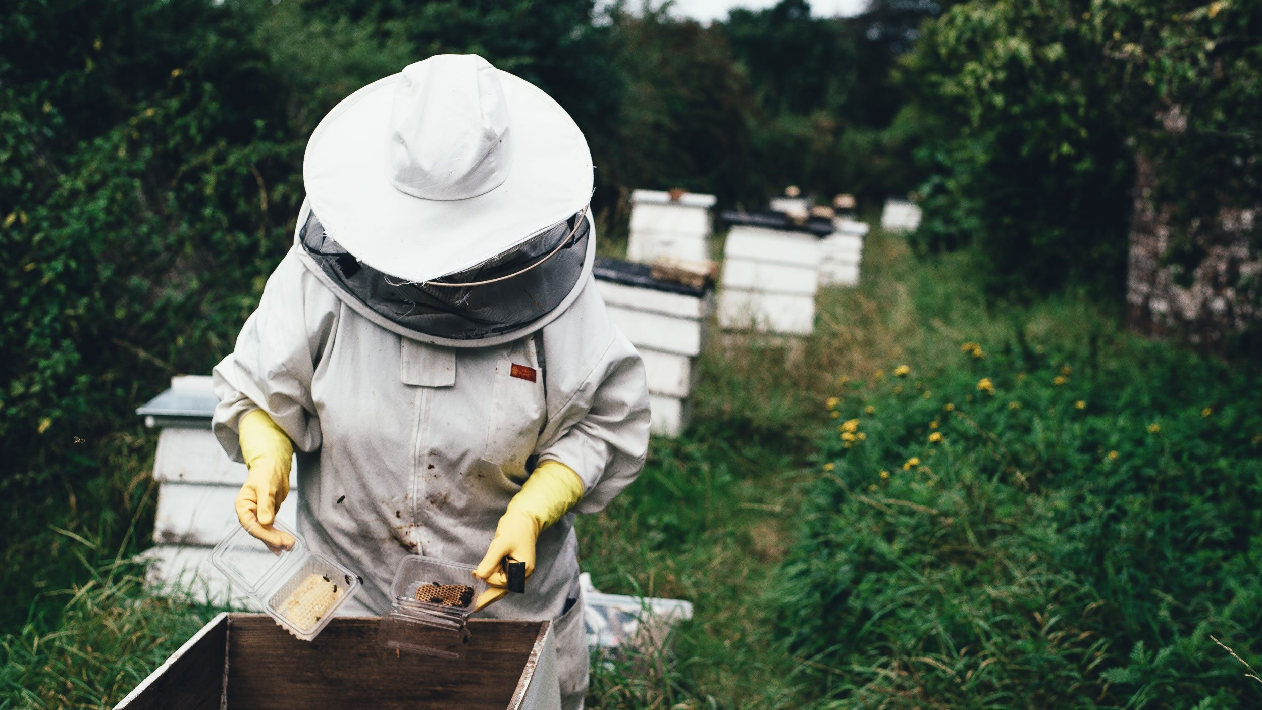 A beekeeper examines a hive box