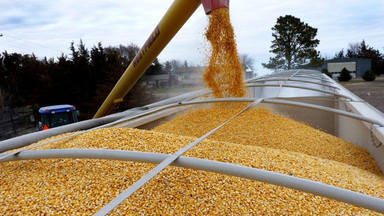 An auger pours corn into the back of a truck