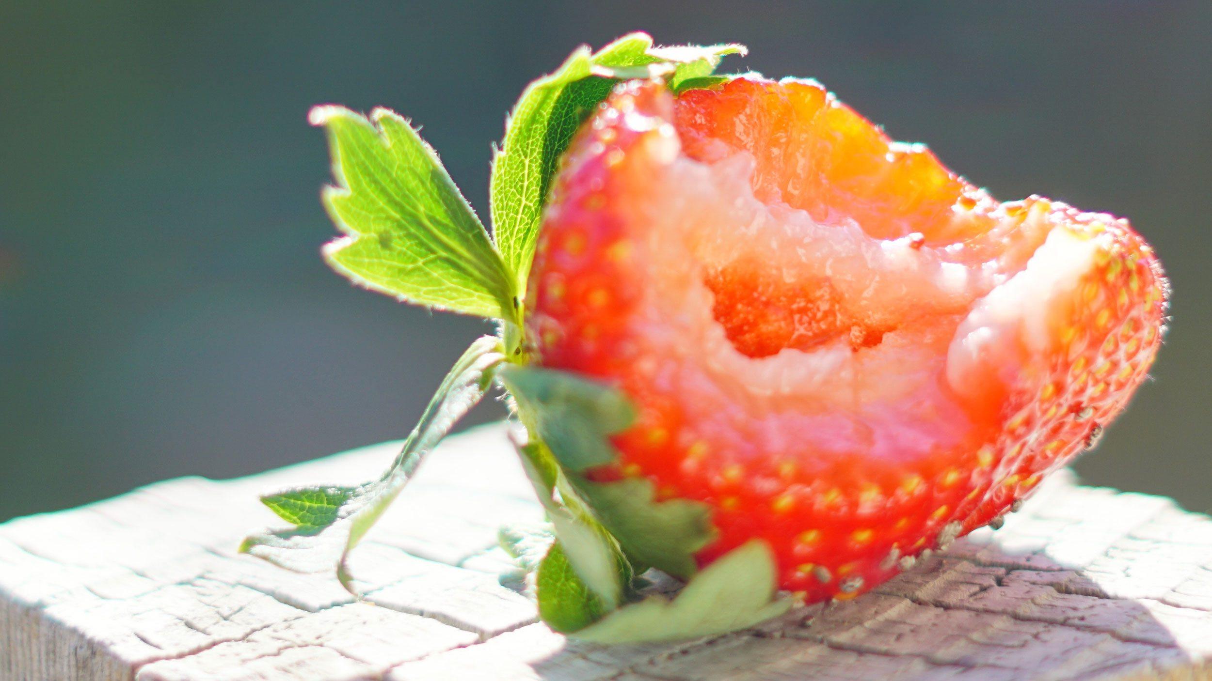 Half eaten strawberry in the sun