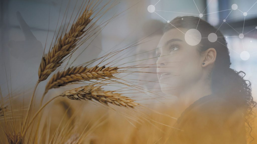 Layered image of woman and group brainstorming, under image of wheat in wheat field