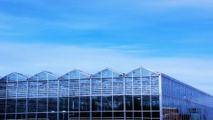 A greenhouse under a blue sky