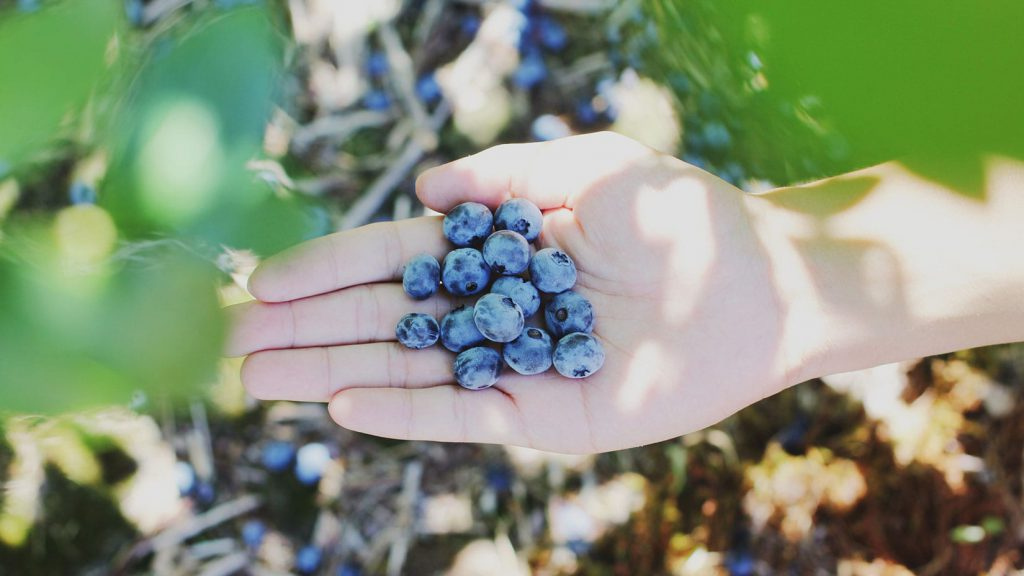 A hand holds a small pile of blueberries in a shaded area