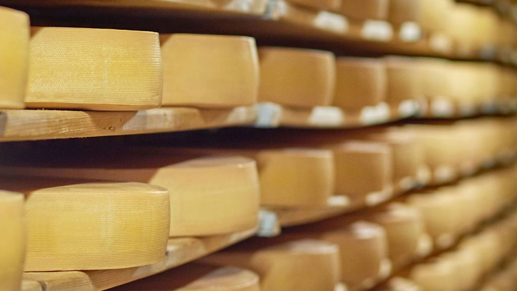 Wheels of cheese on shelves