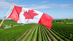 A Canadian flag flies in front of a planted field.