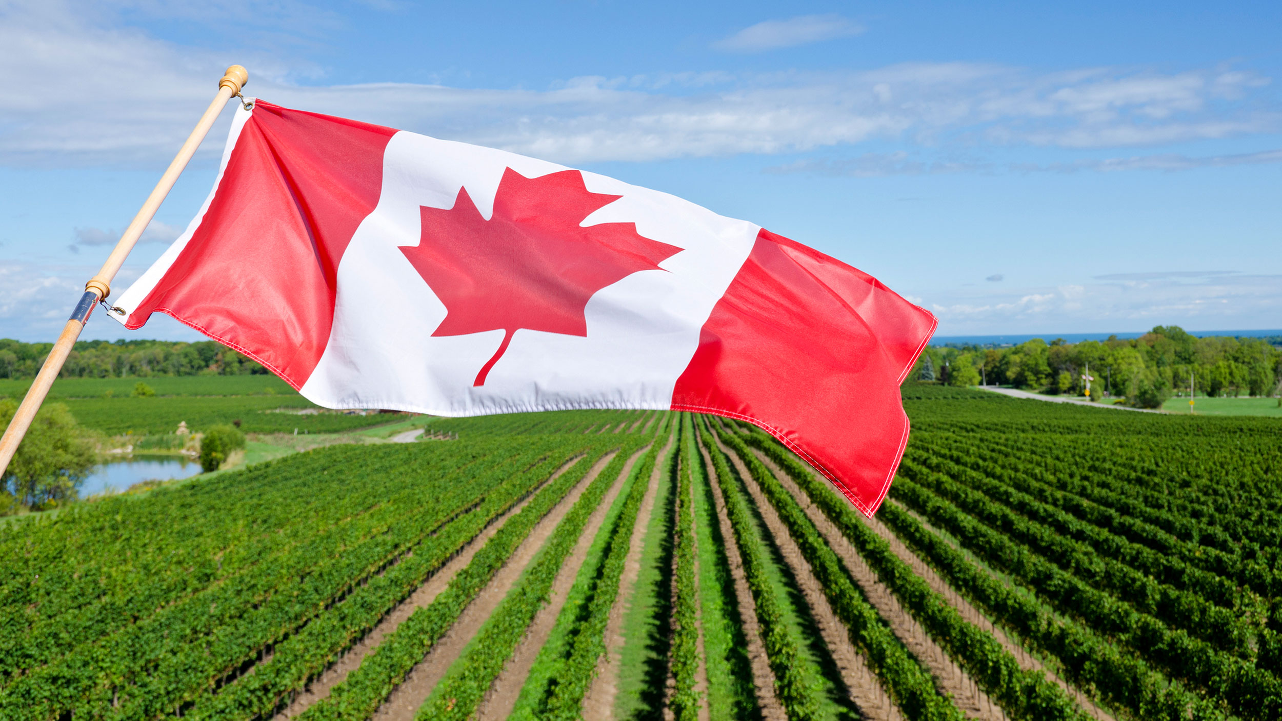 Canadian Flag flies over a vineyard.
