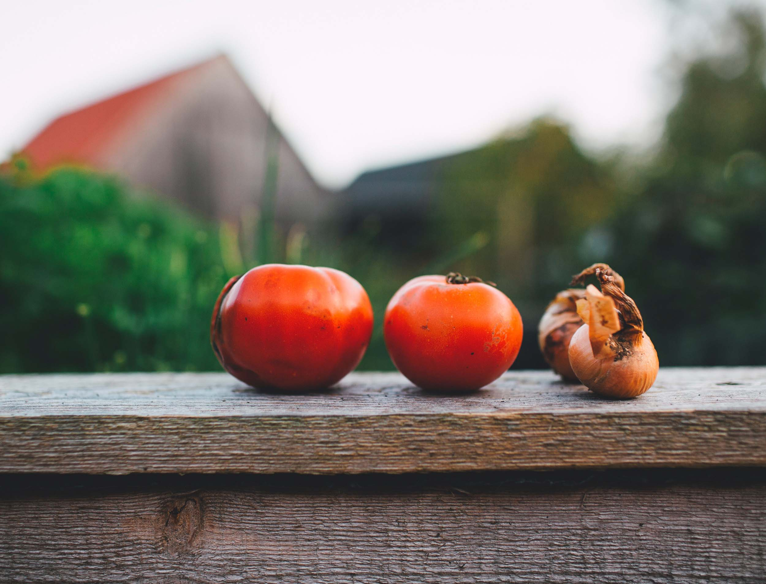 Two tomatoes and two bulbs of garlic sit on a wooden fence in a pastoral scene