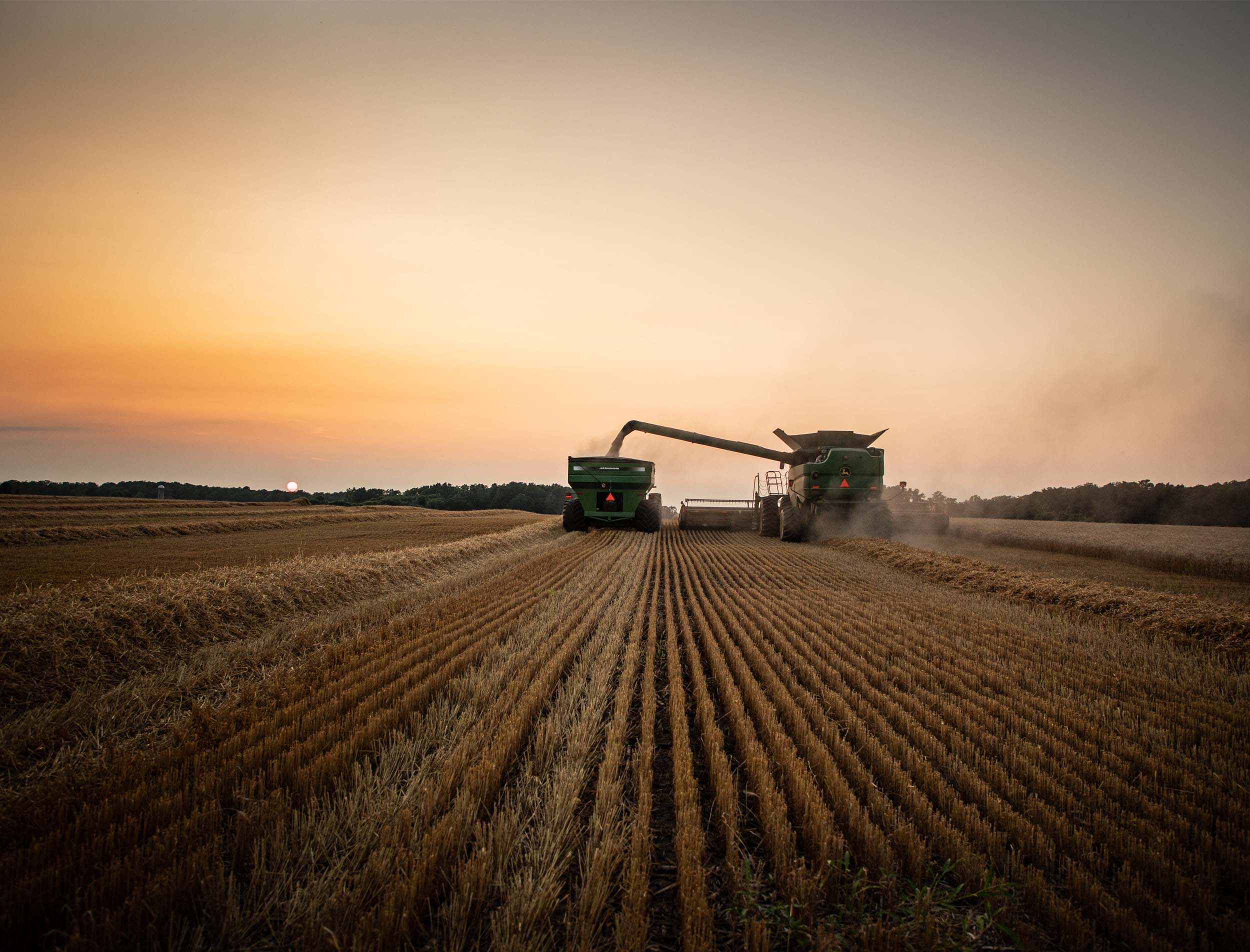 A combine unloads wheat into a truck at twilight