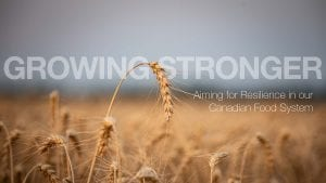 "Wheat field with text reading ""Growing Stronger; Aiming for Resilience in our Canadian Food System"""