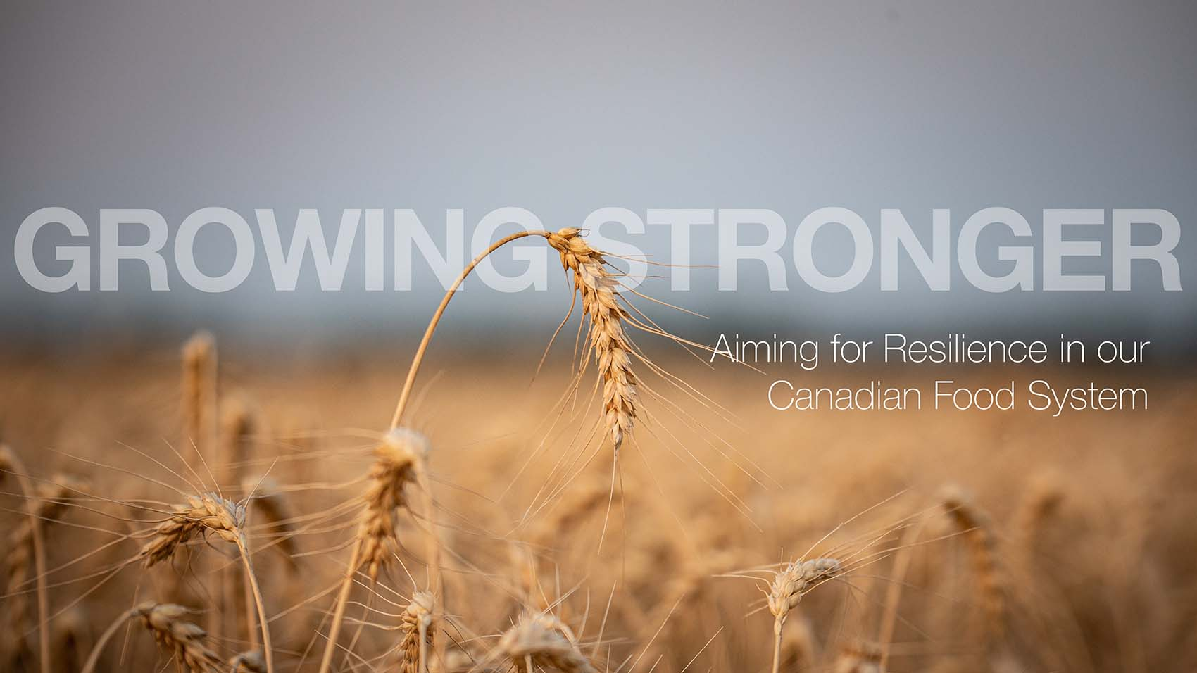 """Wheat field with text reading """"Growing Stronger; Aiming for Resilience in our Canadian Food System"""""""