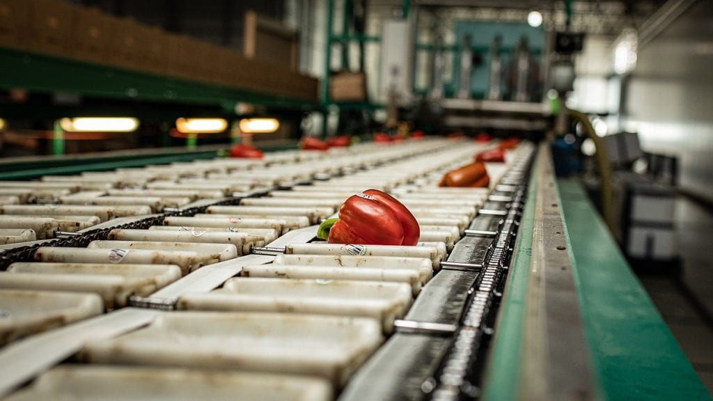 A red pepper on a conveyor belt.